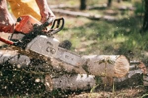 Set Up a Company in the Forestry Sector in Turkey